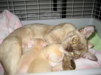 Millie, our foundation queen and her babies