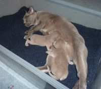 Kristal and her 2 boys, born 5/1/10