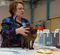 USA Judge Rachael Anger with Rose.  Rachael awarded Rose 1st kitten overall in her ring.