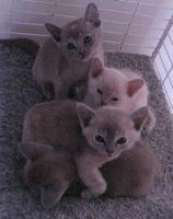 Aren't we cute?  Madonna's babies taken 25/3/11