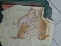 Custer & Poppy's 3 babies - Jan 12