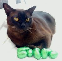 Coco, who lives with Rose and John with his stash of Easter eggs.